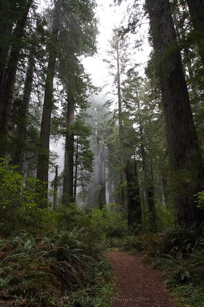 Damnation Creek Trail  - Redwood National park