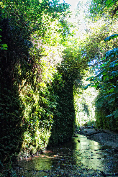 Fern Canyon Hike in the Prairie Creek Redwoods National State Park