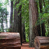 Stout Grove walk in the Jedediah Smith Redwoods State Park