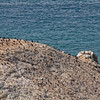 Cormorants resting on large a rock - seen from Coastal Drive near Klamath - CA