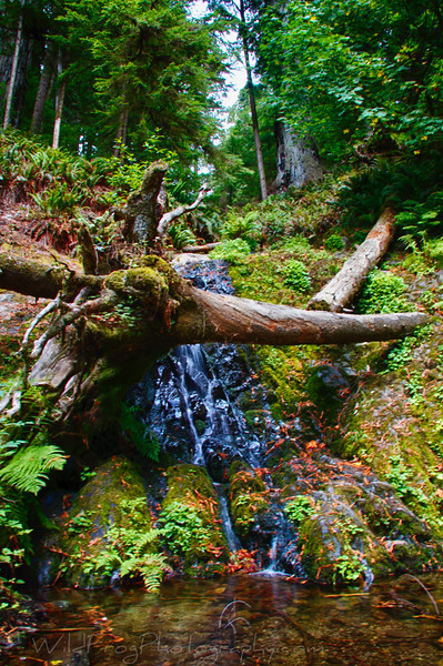 Fern Falls at the end of Boy Scout Trail - Jedediah Smith Redwoods Start Park.