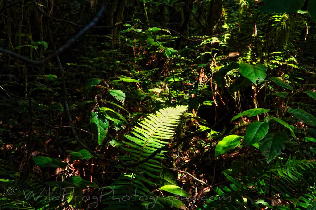 Sunshine hitting ferns on the Lady Bird Johnson Grove