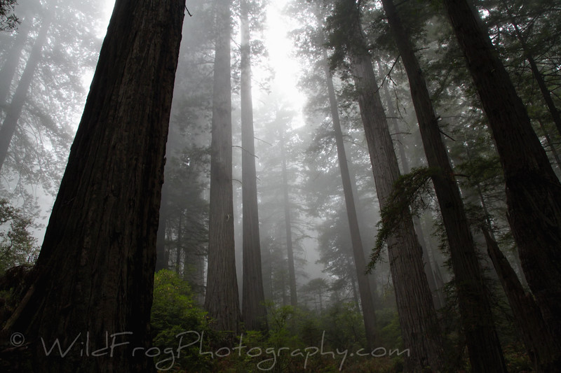 Misty morning hike on the Damnation Creek trail