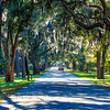 Over hanging Spanish Moss