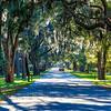Spanish Moss hanging over road South Carolina