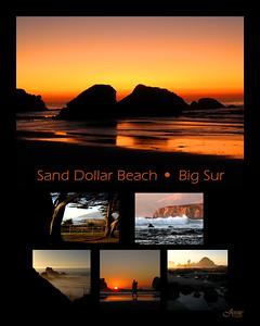 SandDollar Ca 16 x 20 BLACK-SIGN