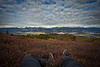 Hiker's legs among the shurbs, Little Coal Creek Trail, Denali State Park, Alaska, USA.