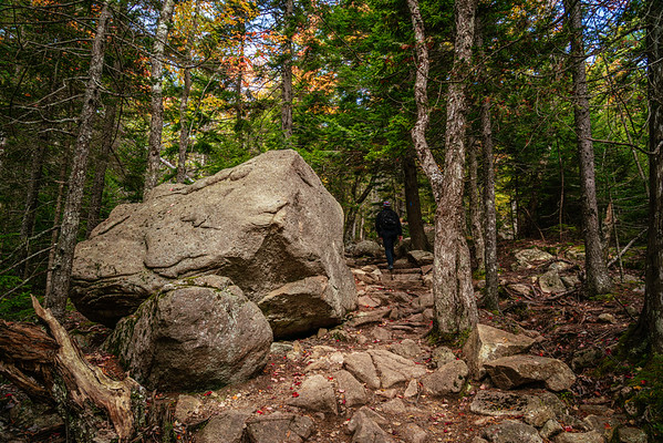 Acadian woodland hiking trail with huge granite boulder