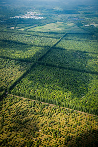 Aerial view of forest, Hawaii