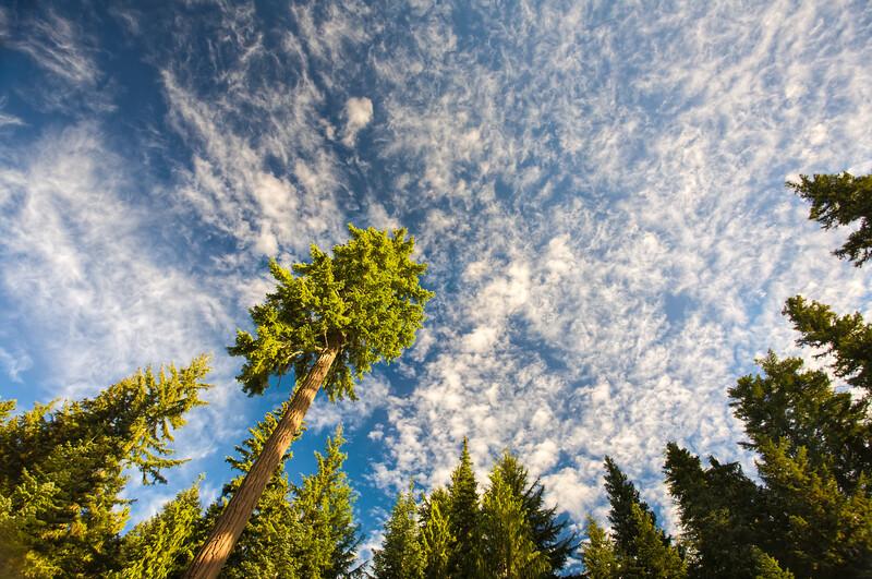 The giants of Mount Rainier National Park, Washington
