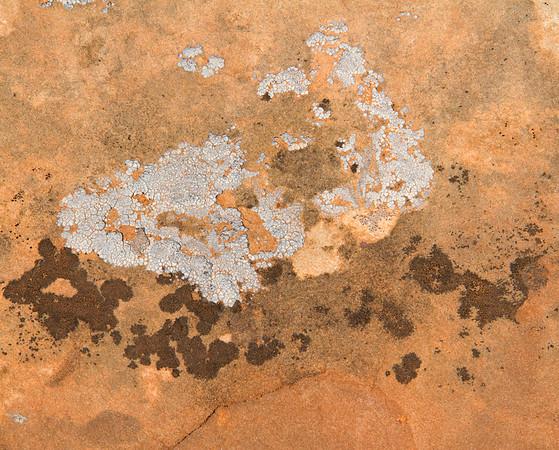 Lichens on sandstone.