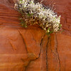 Tenacious plant.
