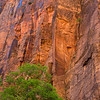 Virgin River canyon wall.