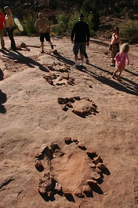 Dinosaur prints!  The rocks are placed around them to keep people from accidently driving on them.