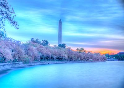 Washington DC_Cherry Blossom