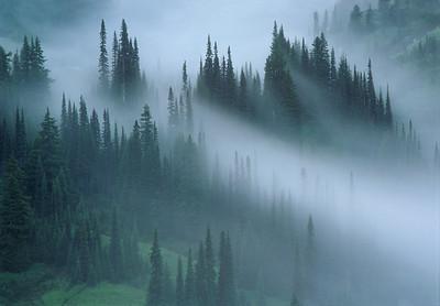 Subalpine Firs on Mount Rainier