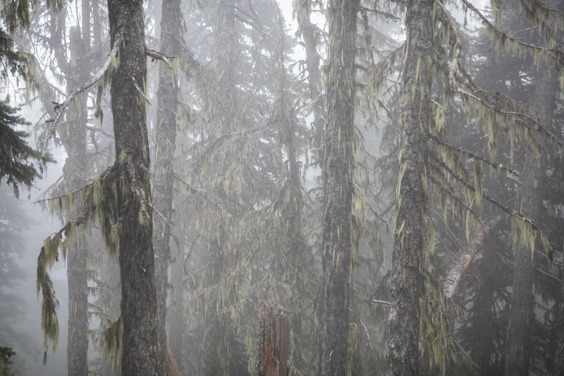 PJ Lake Trail, Obstruction Point, Olympic National Park