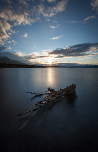 Driftwood in Lake, Kluane