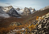 Boulder amidst fall colors, Grizzly Lake trail, Tombstone Territorial Park, Yukon, Canada.