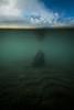 Underwater diftwood, Kluane