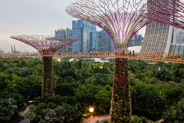 Daytime view of the Gardens by the Bay skyway in Singapore
