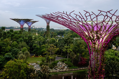 Must see Singapore Gardens by the Bay during daylight