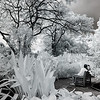 Infrared picture of young lovers kissing on a bench in Singapore's Botanical Gardens
