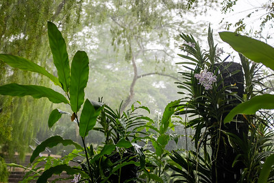 Singapore's Botanical Gardens in a refreshing tropical rain