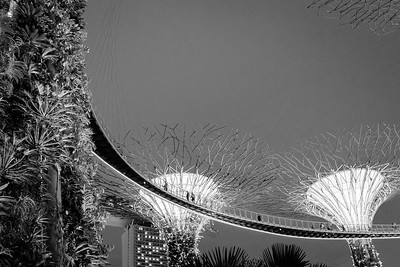 Black and white supertrees in Gardens by the Bay