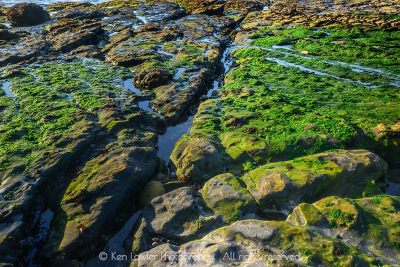 Algae-coated beach plateau