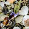 Shells, rocks, and leaf