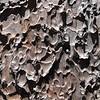 Sunlit bark pattern