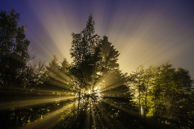 "ABSTRACT 8610  ""Foggy Night Yard Light"""