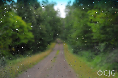 Water droplets on a windshield.