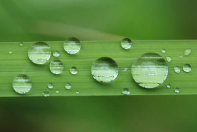 "MACRO 9517  ""Crystal Planets""  Water droplets on a blade of grass after a rainy night."