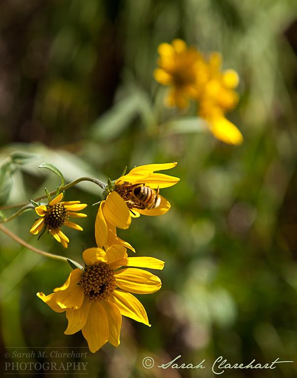WildflowerBee