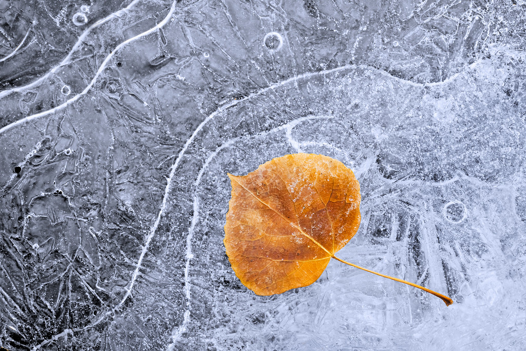'Twixt Autumn and Winter