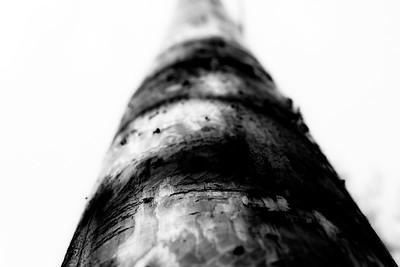 23 Pole