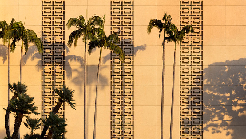 LDS Palm Trees 2015