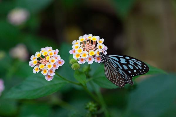 Taken in Bornholm Butterfly Park