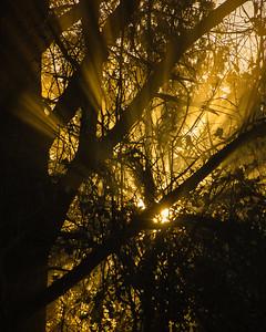Rays of light on an autumn morning