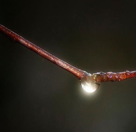 """""""Naturens halskjede"""".  Tatt med blits for å skape lyset i vanndråpen."""