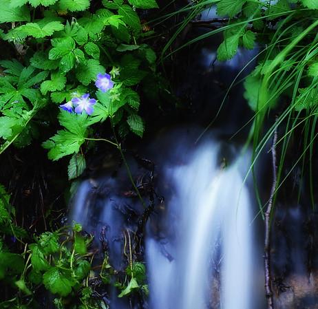 Bilde av liten bekk tatt med lang lukkertid. Øvre Hetlend, Hommeråk, Sandnes. (Vet du navnet på blomsten så send en e-post.)