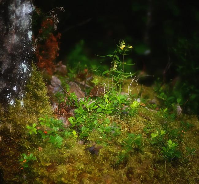 Detaljer fra skogbunnen. Tatt med blits.