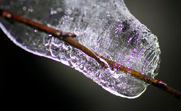 Is som har samlet seg rundt en grein. De lilla prikkene kommer av blitsen. Øvre Hetland, Hommersåk, Rogaland.