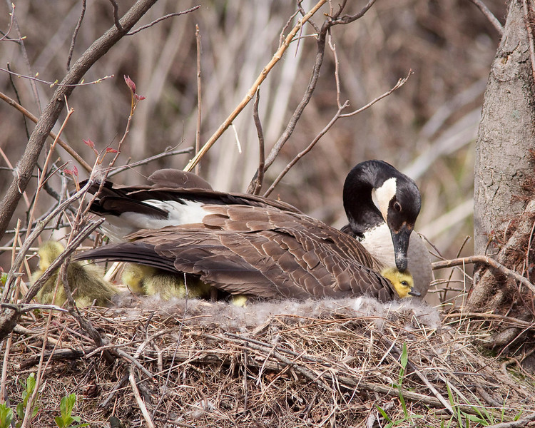 Wildwood Nature Park, Harrisburg, PA
