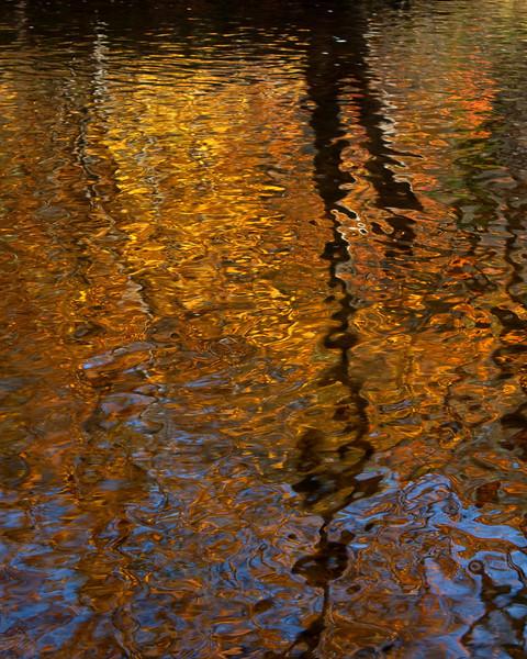 Fall Foliage Reflection - York, PA