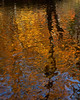 Fall Foliage Reflection - York, PA
