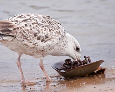 A Crab Dinner