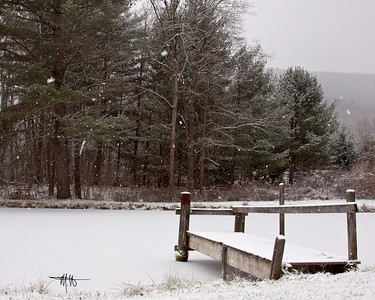 Snow Falling along the Deer Trail